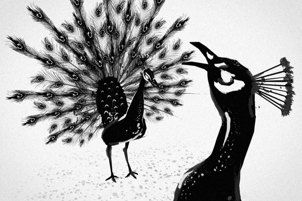 — The peacock